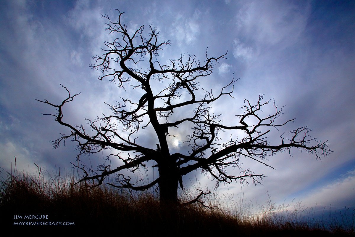 A wicked looking tree in the Badlands, SD