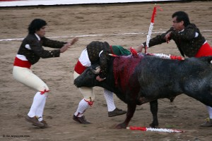 Mazatlan Bull Fighters